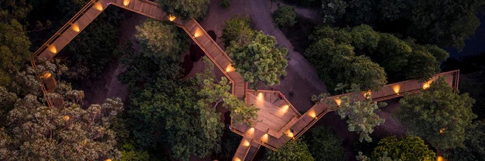 treetop serralves porto