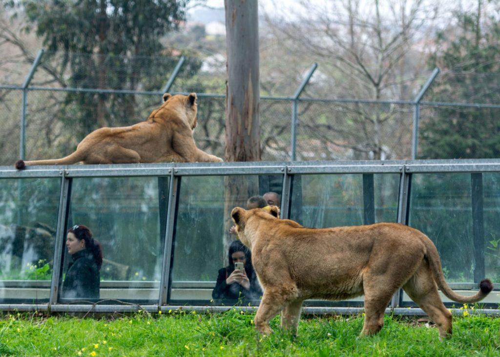 Zoo Santo Inácio em Gaia