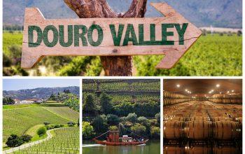 Tour Vale do Douro Degustação de Vinhos Cruzeiro e Almoço